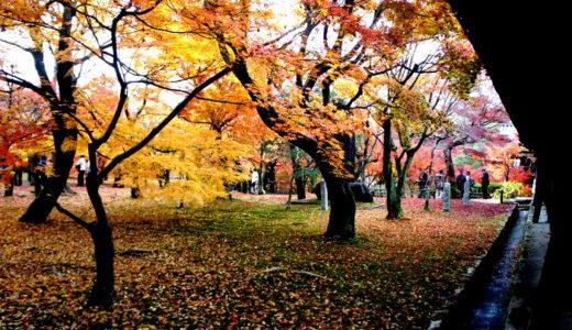 京都紅葉名所めぐり2011 ~東福寺&嵐山~