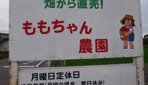 ももちゃん農園( 焼津市 ) ~自分で野菜の収穫ができる八百屋~