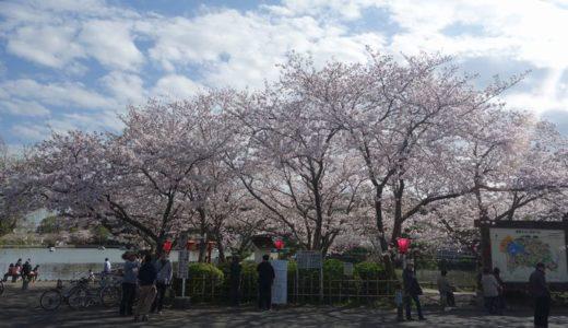 藤枝 蓮花寺池公園を春散歩♪