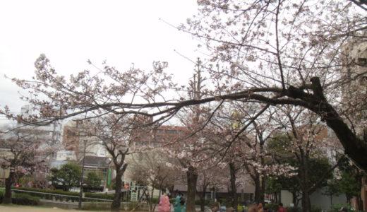 2010年 桜の季節到来