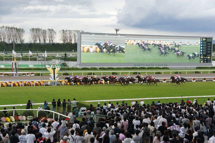 菊花賞2011-5